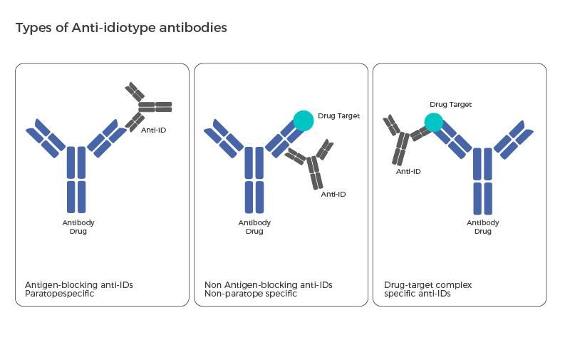 Types of Anti-idiotype antibodies