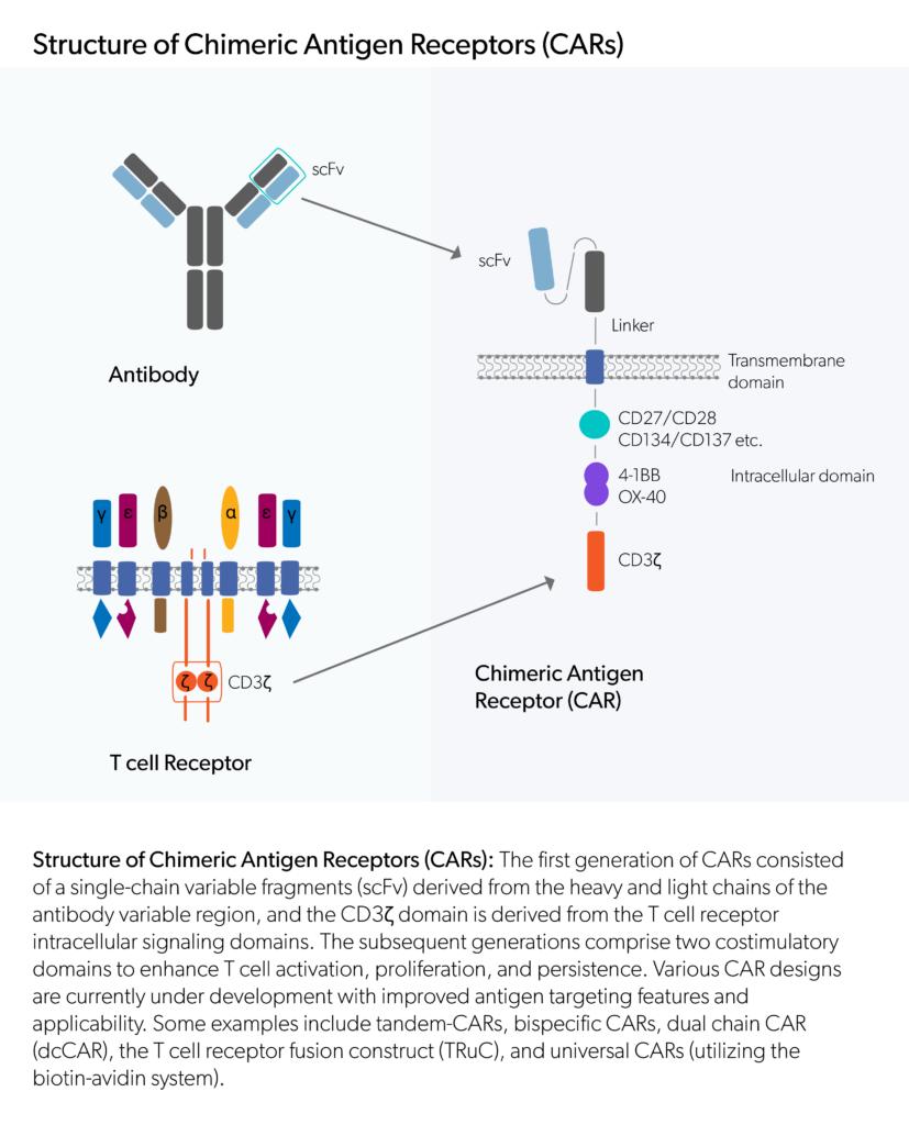 Structure of Chimeric Antigen Receptors (CARs)