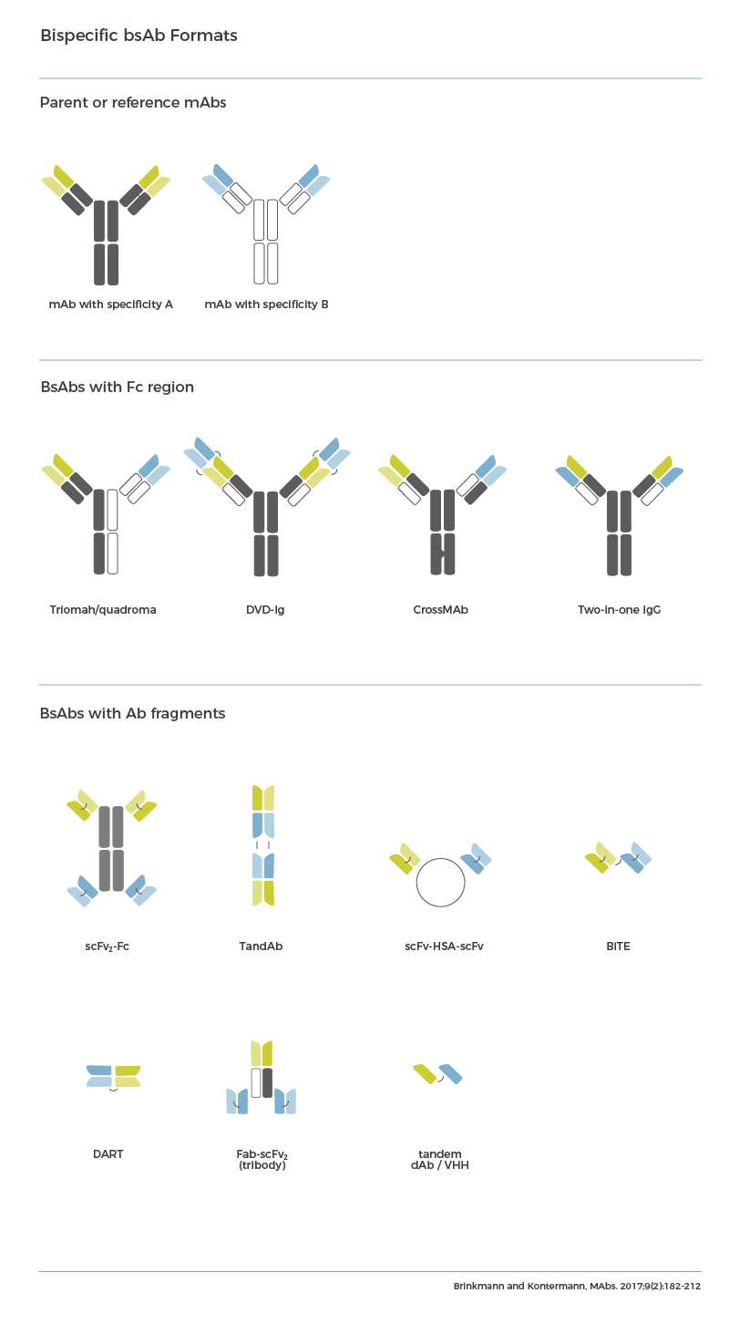 Types of bispecific antibody formats possible from 2 different parent monoclonal mAbs. Category 1: Bispecific antibodies with Fc region. Examples, Triomab/Quadroma, DVD-Ig, CrossMAb, Two-in-one IgG. Category 2: Bispeific antibodies with mAb fragments. Example, ScFv2-Fc, TandAb, ScFv-HAS-scFv, BiTE, DART, Fab-scFv2 (tribody), Tandem dAb/VHH.